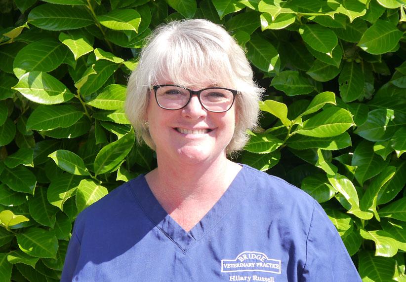 Hilary Russell Veterinary Surgeon