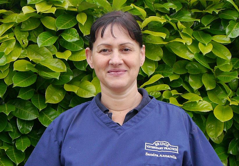 Sandra Annarella Veterinary Surgeon