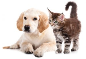 Pet plan for cats , dogs and rabbits